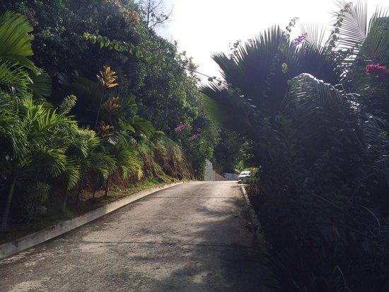Villas de Jardin: Road