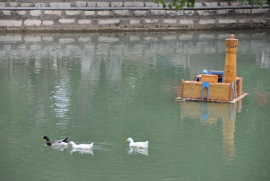 Lyab-i-Hauz: tireless ducks in the pool :)