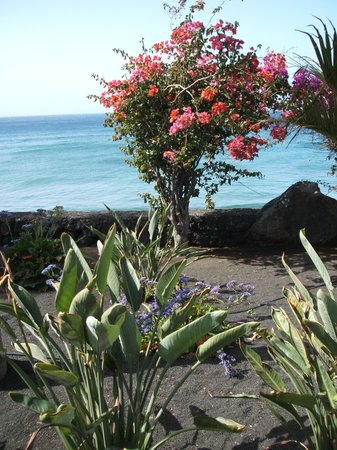 Hotel Lanzarote Village : tropical plants