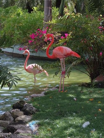 Iberostar Grand Hotel Bavaro: nature's finest