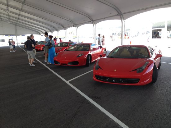 Exotics Racing: some of hte cars