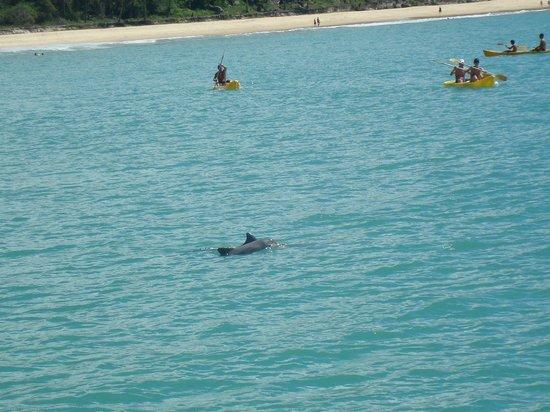 Dolphins Bay : Foto tirada da escuna