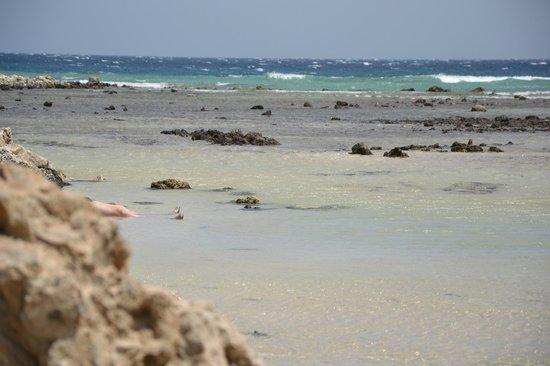 LABRANDA Club Makadi : На островке