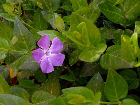 West Fork Oak Creek Trail: flowers along West Fork hiking trail