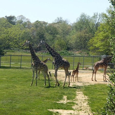 Roman Holiday Motel: Baby Giraffe, two months old, Cape may zoo