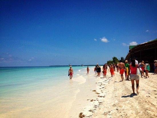 Sol Palmeras: Plage Ile Cayo Blanco Excursion avec les dauphins et Catamaran