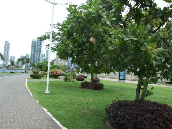 Radisson Decapolis Hotel Panama City: Walking distance from hotel.