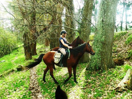 Briars Horse Trek
