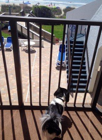 Ocean Park Resort, Oceana Resorts : Bryson on the balcony room #206