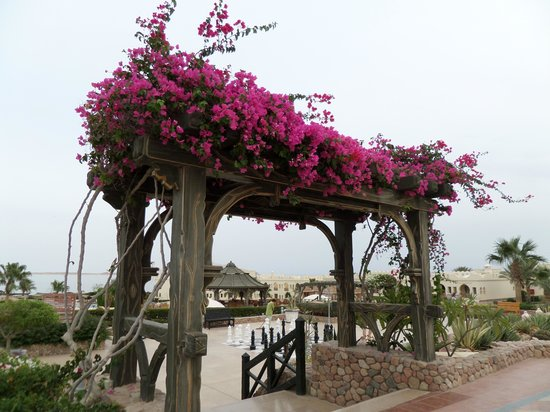 Sea Club Resort - Sharm el Sheikh: So pretty!