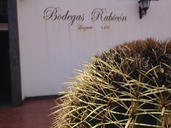 Bodegas Rubicon: Detalle de la entrada