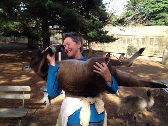Paul's Place Wildlife Sanctuary : Feeding a big baby