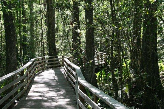Corkscrew Swamp Sanctuary: boardwalk