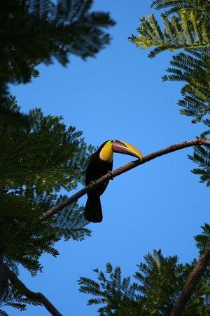 Finca Bavaria: toucan