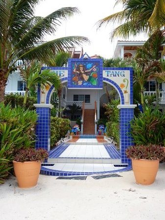 Blue Tang Inn: View from the beach, room 9 being on the left, 2nd floor, with blue hammock