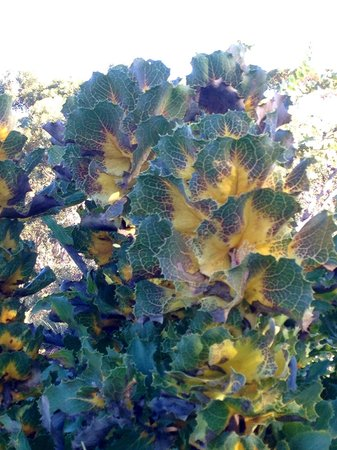 Paul's Place Wildlife Sanctuary : Looks like a Cabbage
