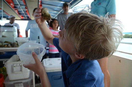 Mote Marine Laboratory and Aquarium: Mote Aquarium interpreted boat tour.