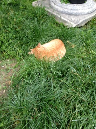 Azade Hotel : Sleeping cat on lawn - happy for a petting!