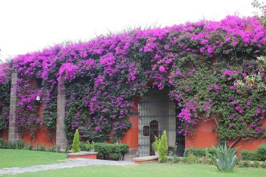 Fiesta Americana Hacienda Galindo: Muitas flores no hotel