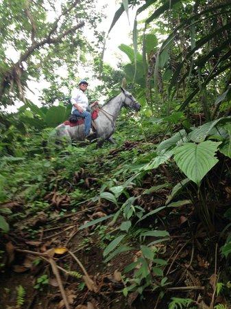 Cabalgata Don Tobias: Through the jungle, horseback.