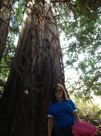 Garrapata State Park: One of the MASSIVE redwoods!