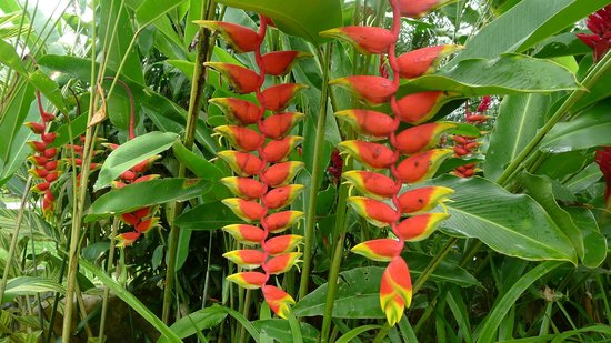 Blue River Resort & Hot Springs: Heliconia
