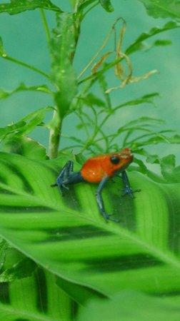 Blue River Resort & Hot Springs: Tree frog