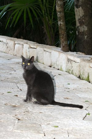 Catalonia Royal Tulum: Kitty on grounds