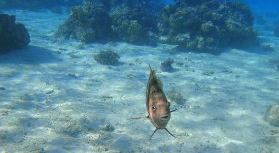 Conrad Bora Bora Nui : Snorkeling on property
