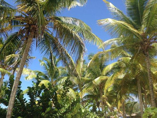 La Playa Orient Bay : Palms