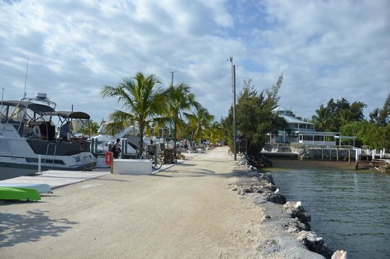 Blackfin Resort and Marina: Hotel grounds