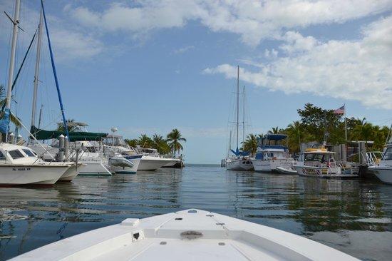 Blackfin Resort and Marina: Hotel grounds