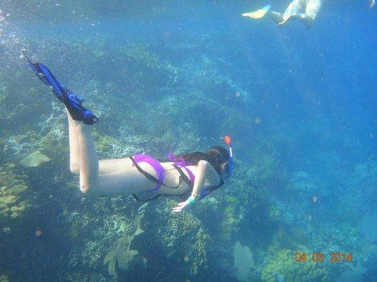 Paradise Island & The Mangroves (Cayo Arena): .