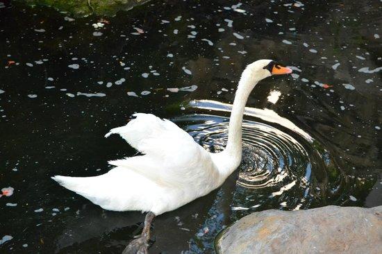 The Westin Maui Resort & Spa : Swan in hotel lobby