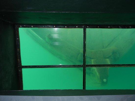 Glass Bottom Shipwreck Tours: Shipwreck through viewing window
