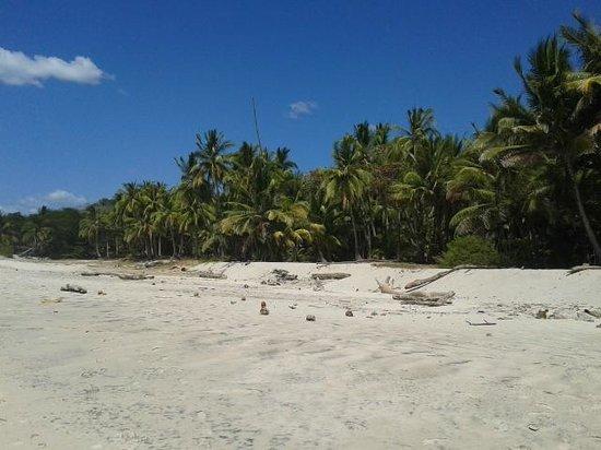 Gumbo Limbo Villas : Playa