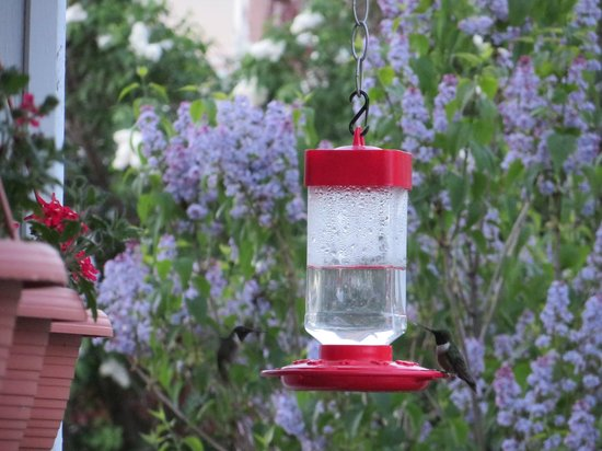 Old Clark Inn: Hummingbirds on the front porch