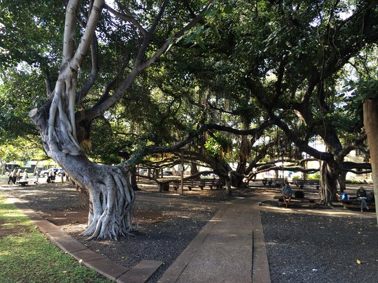 Local Boys West : Enjoy Under the Banyan Tree
