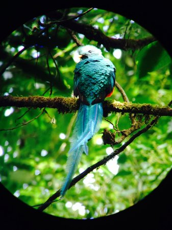 Pasion Costa Rica: A Quetzal!