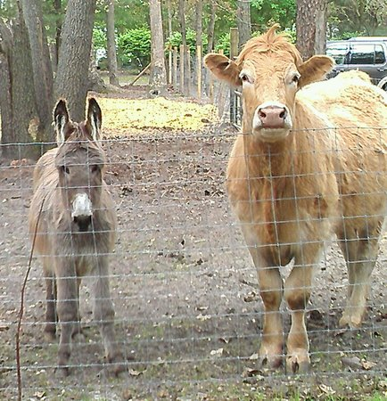 Yogi Bear's Jellystone Park Camp-Resort at Tall Pines : Stop by and say hello to Eli and Porter.