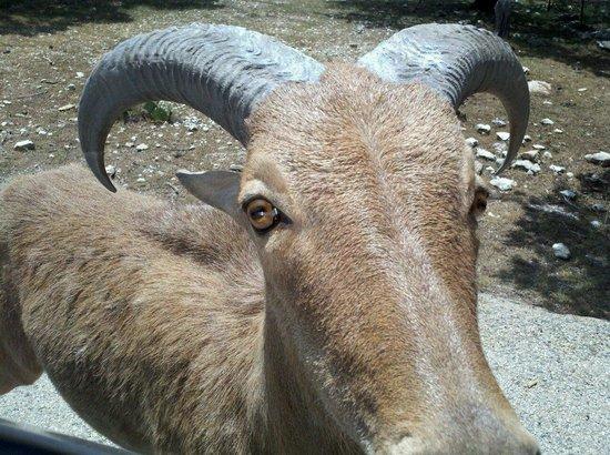 Fossil Rim Wildlife Center : Where's the Treat?