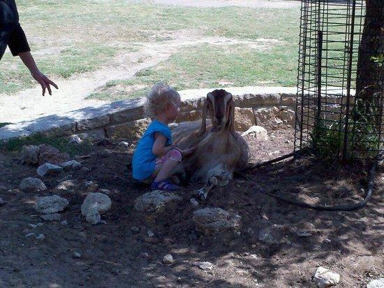 Fossil Rim Wildlife Center : Petting Zoo