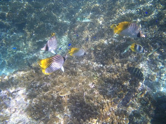 Heilala Holiday Lodge: Amazing tropical fish & snorkelling