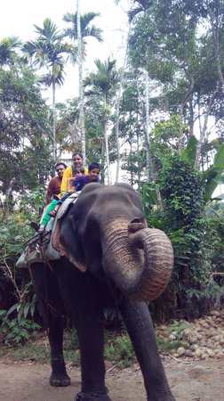 Elephant Junction - Day Tours: Family ride on Elephant