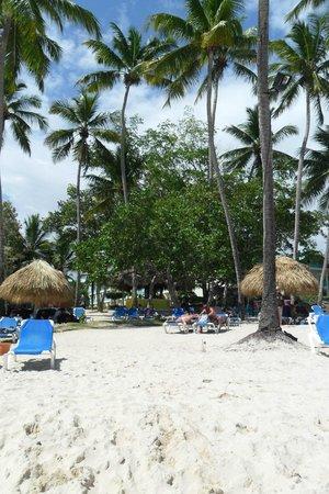 Dreams La Romana Resort & Spa : ,