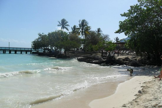 Dreams La Romana Resort & Spa : ,