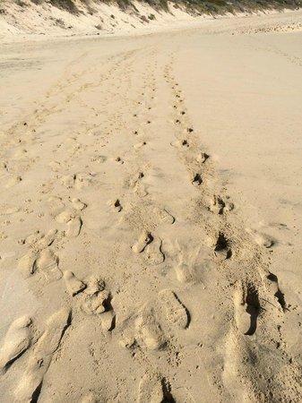 Cape to Cape Explorer Tours: Footprints