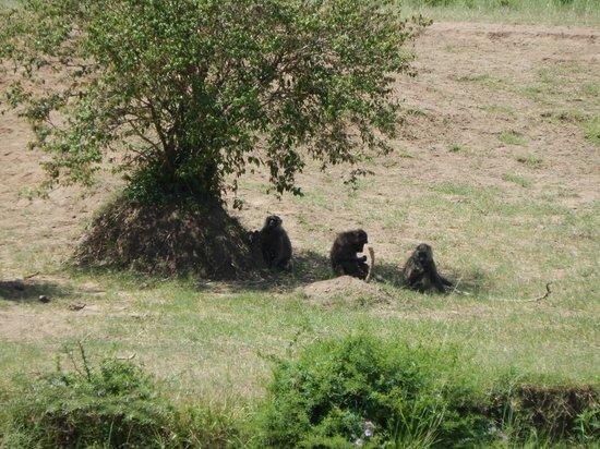 Safari Kenya Watamu - Day Tours: Kenya