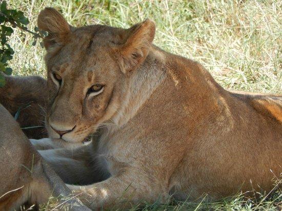Safari Kenya Watamu - Day Tours : Kenya