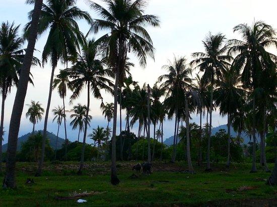 Centra by Centara Coconut Beach Resort Samui: the coconut surrounding
